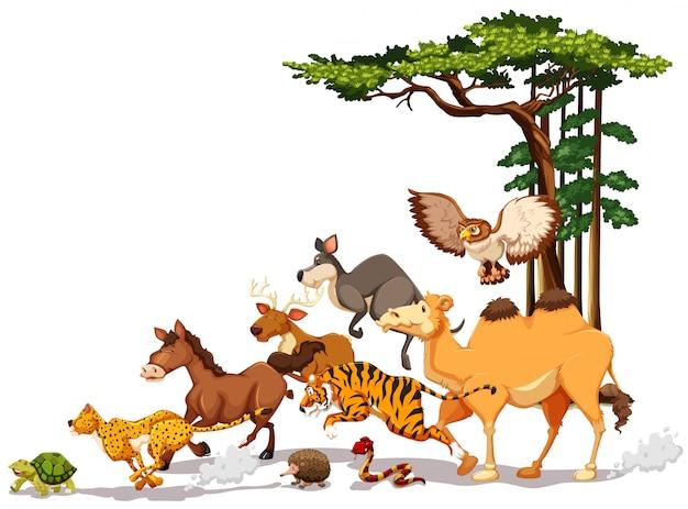 Dzikiej przyrody