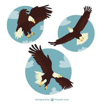 Eagle ilustracje