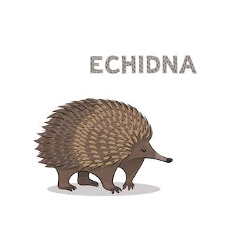 Echidna kreskówka, na białym tle. alfabet zwierząt.