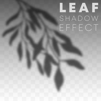 Efekt nakładki cienia liścia na przezroczystym tle