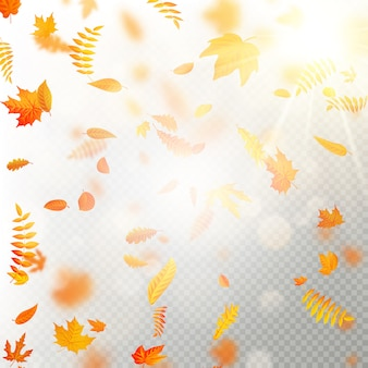 Efekt opadających liści jesienią z rozmyciem. jesienne liście wchodzą szablon. ciepły kolor.