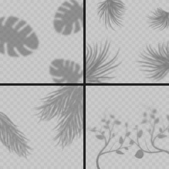 Efekt przezroczystych liści cienie