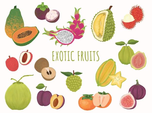 Egzotyczne kolekcje ilustracji owoców tropikalnych