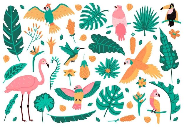 Egzotyczne liście i ptaki na białym tle