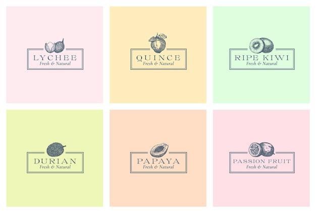 Egzotyczne owoce abstrakcyjne znaki wektorowe symbole lub logo szablony kolekcja ręcznie rysowane liczi pasja f...