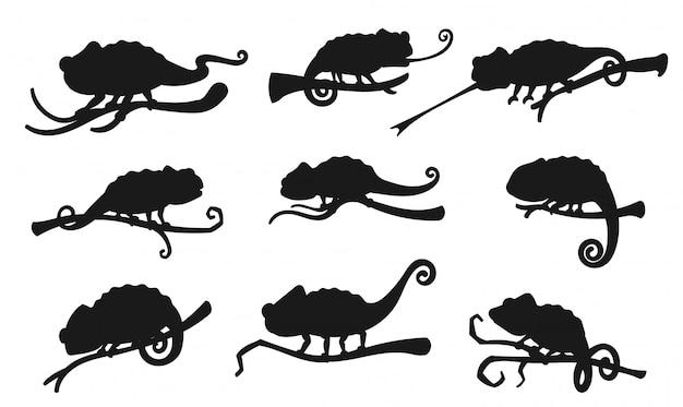 Egzotyczny gad jaszczurki, język kameleona zwinięty