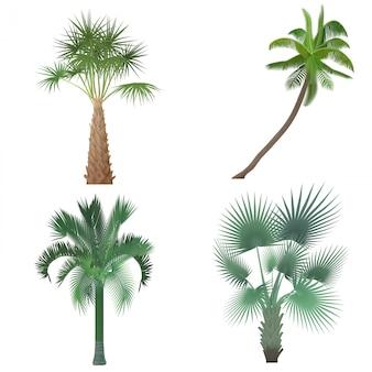Egzotyczny tropikalny realistyczny drzewka palmowego kolekci set.