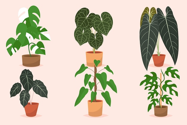 Ekologiczna kolekcja płaskich roślin doniczkowych