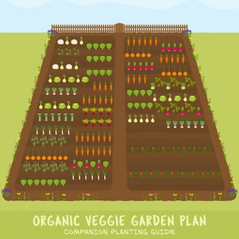 Ekologiczny ogród warzywny