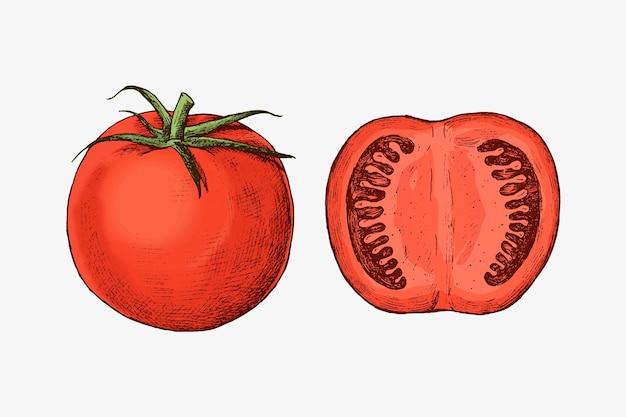 Ekologiczny świeżo pokrojony wektor pomidora
