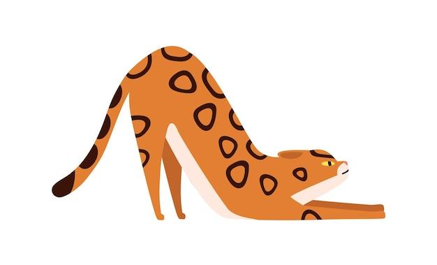 Elastyczne kot bengalski rasy wektor ilustracja kreskówka płaskie. rozciąganie zauważył zwierzę domowe na białym tle. śliczne zwierzę bengalski imbir wykazujące elastyczność.