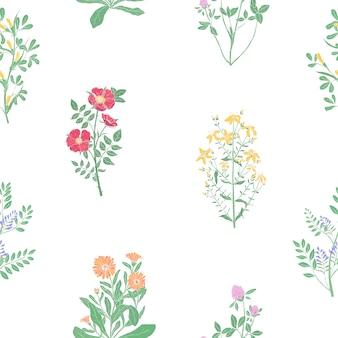 Elegancki botaniczny wzór z zioła lecznicze łąki