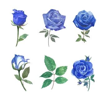 Element kwiatu róży akwarela na białym do celów dekoracyjnych.