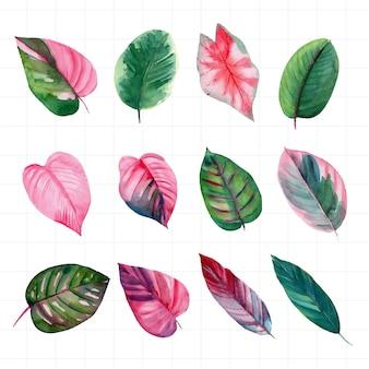 Element liścia narysowany akwarelą na białym tle