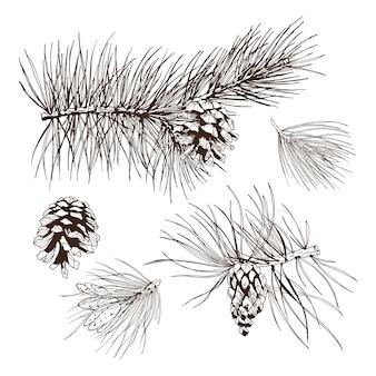 Element projektu sosnowych gałęzi