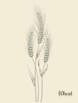 Element ucha retro pszenicy, trawienie cieniowanie i styl rysowania tuszem na beżowym tle