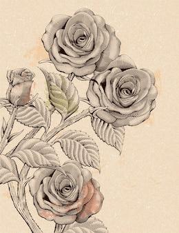 Elementy dekoracyjne róż retro, kwiaty w stylu akwaforty cieniowania lub rysowania tuszem na beżowym tle