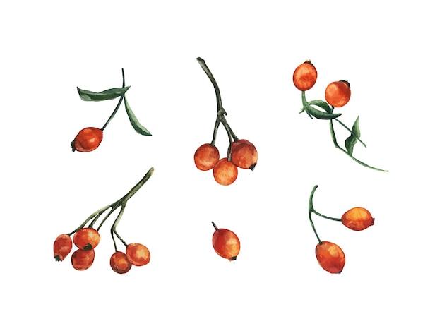 Elementy jagody na białym tle wektor róży