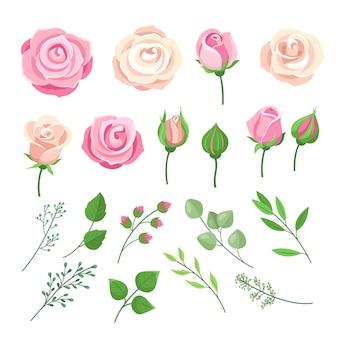 Elementy róży. różowe i białe róże kwitną z zielonymi liśćmi i pąkami.