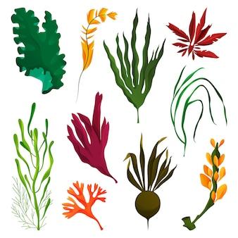 Elementy wodorostów lub wodorostów, zestaw roślin wodnych. ikony glonów tropikalnych