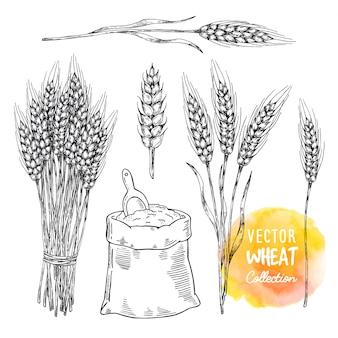 Elementy zbioru pszenicy. snop pszenicy i worek mąki z łopatą.