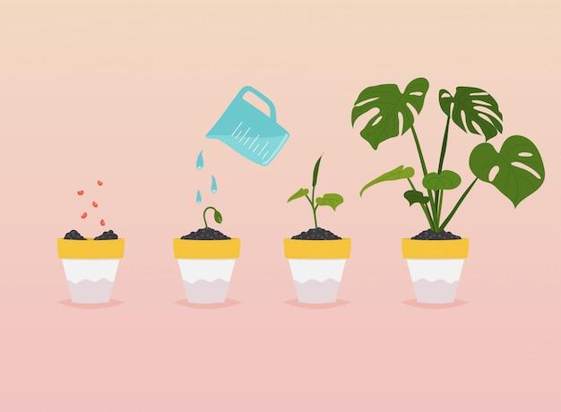 Etapy uprawy roślin. infografika osi czasu sadzenia drzew.