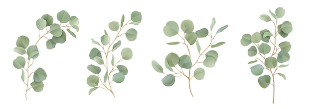 Eukaliptus wektor akwarela zestaw kwiatowy. zielone gałęzie liści, zieleń srebrnego dolara, naturalne liście tropikalne elementy na zaproszenia ślubne, artykuły papiernicze, pozdrowienia, tapety, moda, tło