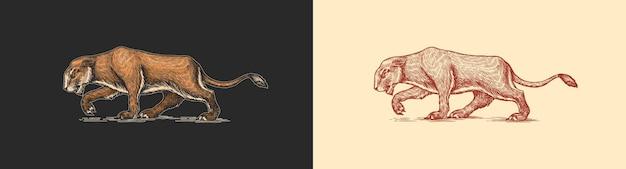 Europejski Lew Jaskiniowy Panthera Spelaea Wymarły Step Zwierzę Vintage Retro Wektor Ilustracja Doodle Premium Wektorów