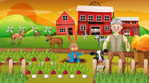 Farma o zachodzie słońca scena ze starym rolnikiem i zwierzętami gospodarskimi