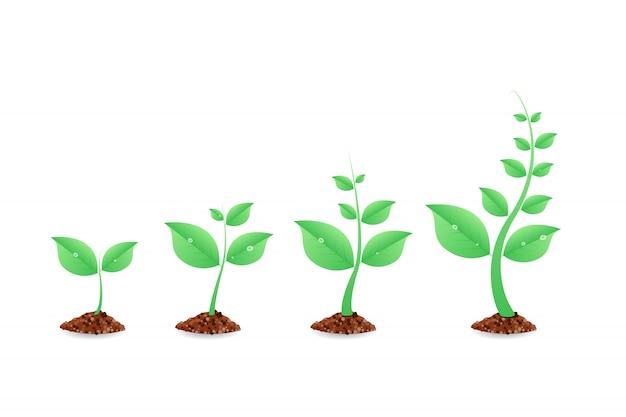 Fazy uprawy roślin. plansza sadzenia drzew. ewolucja . nasiona kiełkują w ziemi. ilustracja.