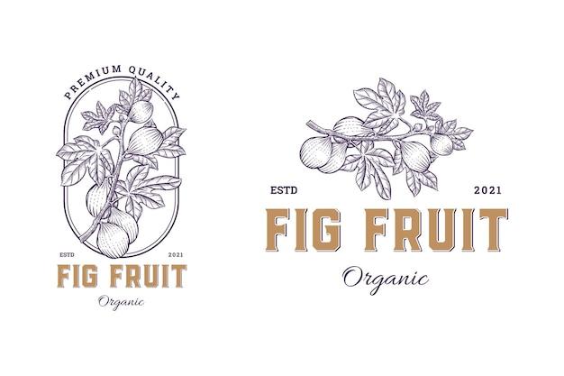 Fig fruit set ręcznie rysowane zestaw logo