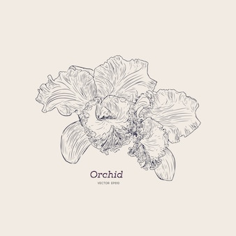 Fiołek i żółta orchidea. ręcznie narysować szkic.