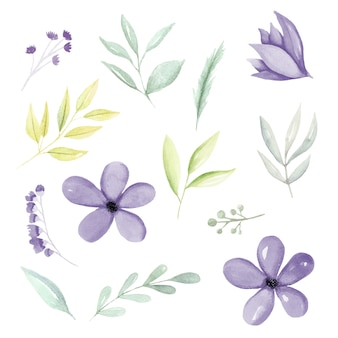 Fioletowe akwarele botaniczne elementy