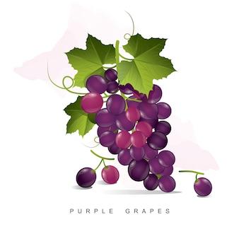 Fioletowe winogrona