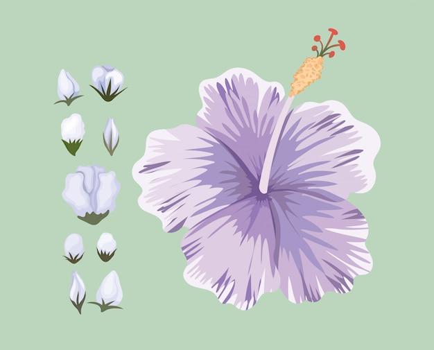 Fioletowy hawajski kwiat malarski, naturalny kwiatowy ornament roślinny dekoracja ogrodowa i ilustracja motywu botanicznego