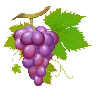 Fioletowy kiść winogron z zielonymi liśćmi na białym tle
