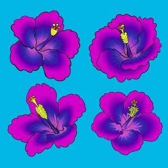 Fioletowy różowy kwiat hibiskusa do kolekcji