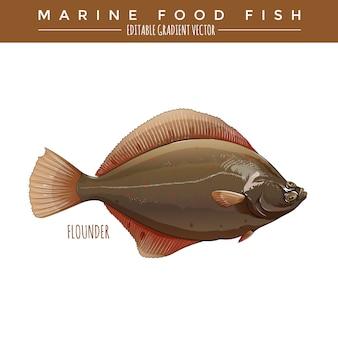 Flądra. ryby morskie