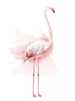 Flamingo akwarela ilustracja