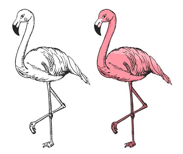 Flamingo szkic ilustracji. szkic flamingo, egzotyczny ptak.