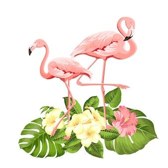 Flamingo w tle.