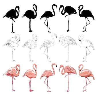 Flamingo, zestaw flamingów