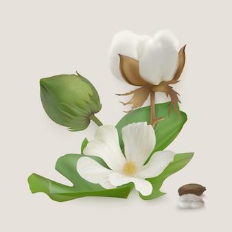 Fotorealistyczna bawełna na jasnym tle. biały kwiat bawełny, torebka, rzep, liście, nasiona.