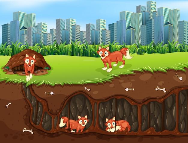 Fox family living underground