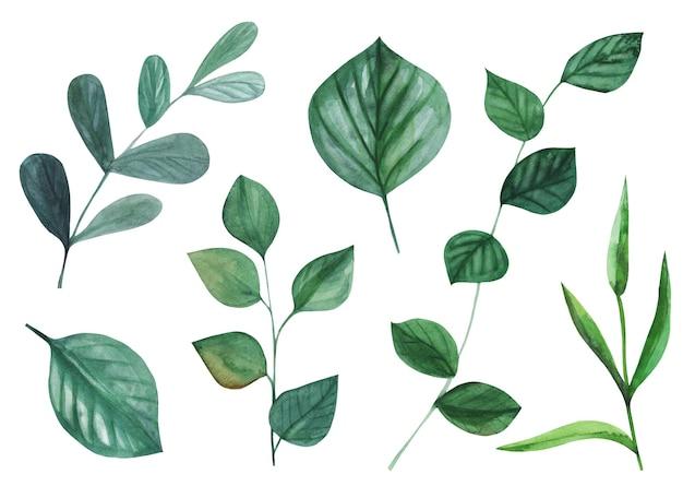 Freen akwarela ręcznie malowane zielone liście.