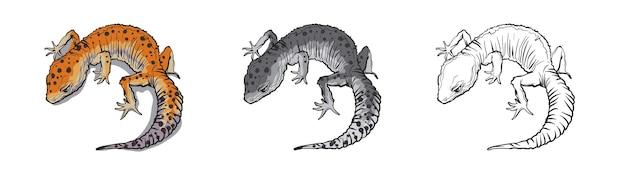 Gad jaszczurka zwierzę. gad na białym tle.