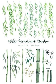 Gałąź akwarela wierzby zielonej i bambus na białym tle kolekcja.