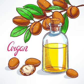 Gałąź drzewa arganowego z owocami i butelką olejku arganowego. ręcznie rysowane ilustracji