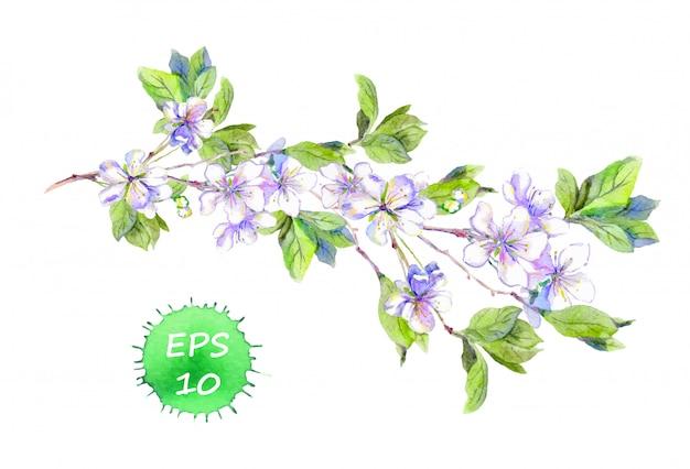 Gałąź kwiat wiśni lub jabłoni sakura. akwarela