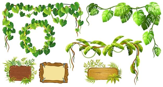 Gałąź liany i rama z liści
